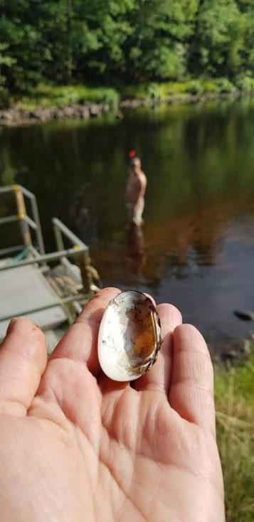 Ludvig helped me pick painter´s mussels! Only empty shells since living painter´s mussels are protected in Sweden! Never pic live ones!